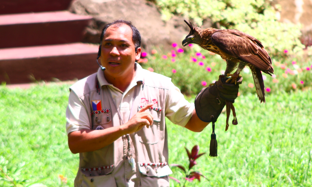 Philippine Hawk eagle